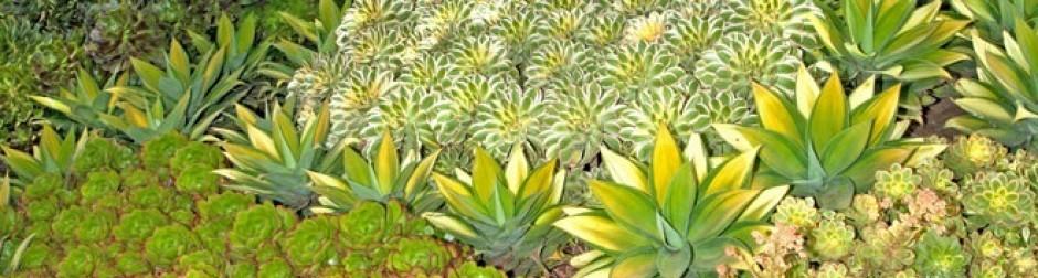 Orange County Cactus Succulent